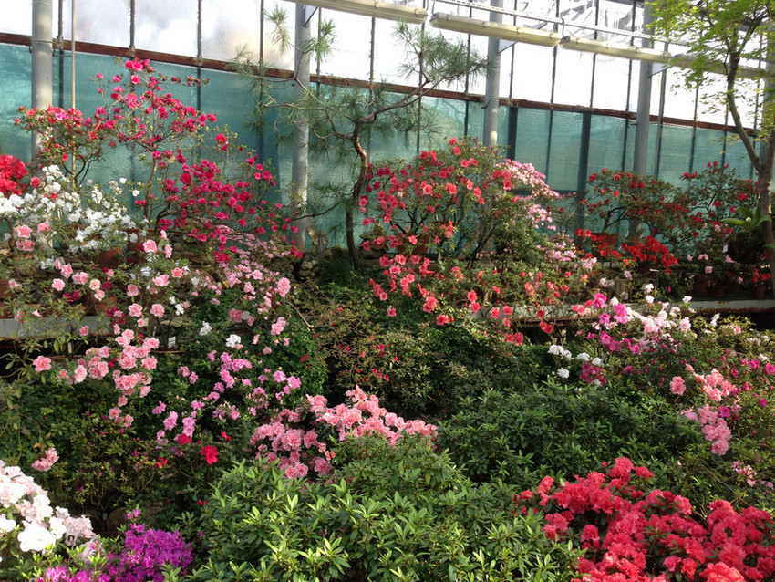 Сезон цветения в ботаническом саду