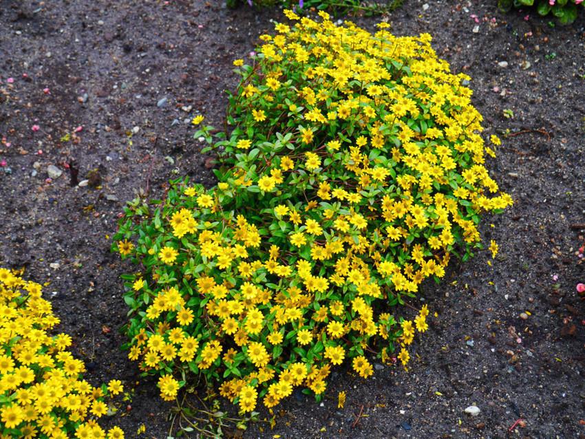 Цветы в Норвегии