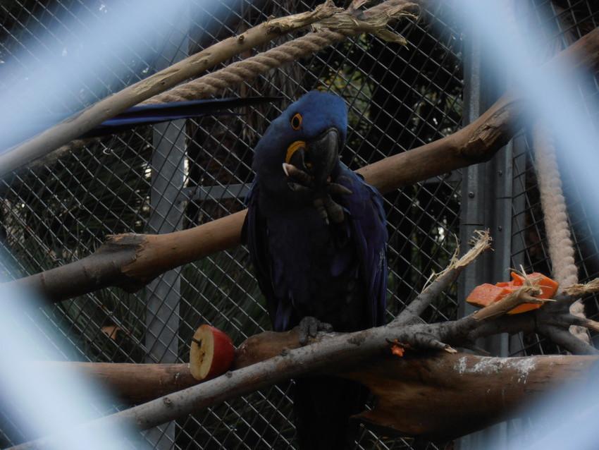 Попугаи зоопарка