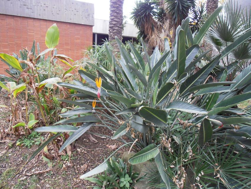 растения в зоопарке Барселоны