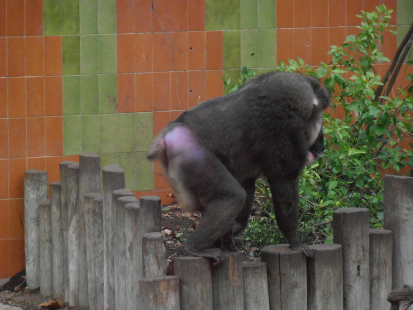 Обезьяны зоопарка
