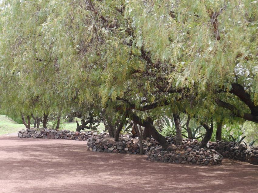 Зеленый садик