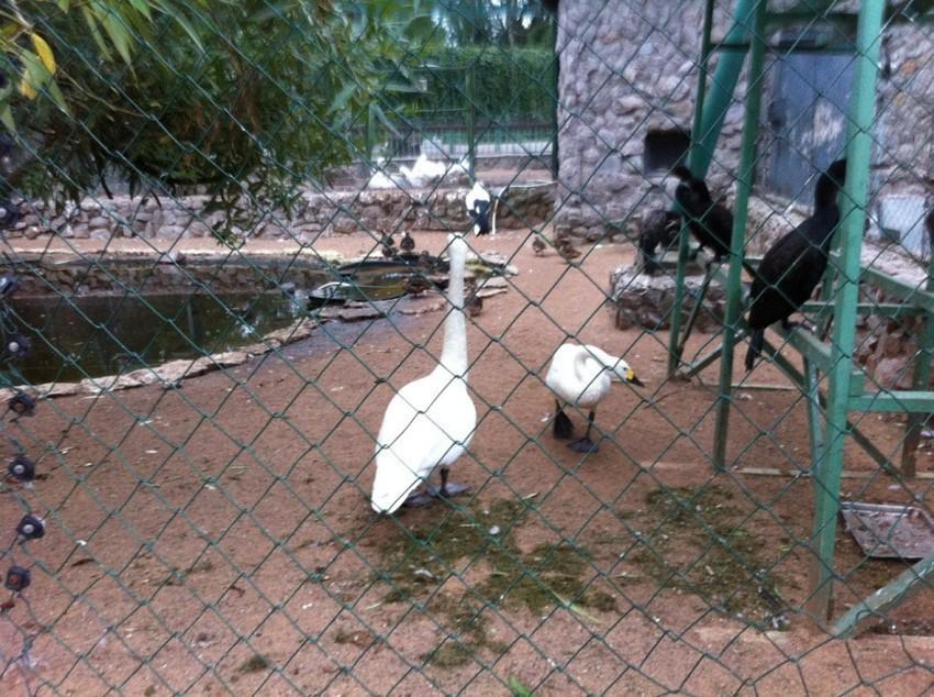Птичники в зоопарке