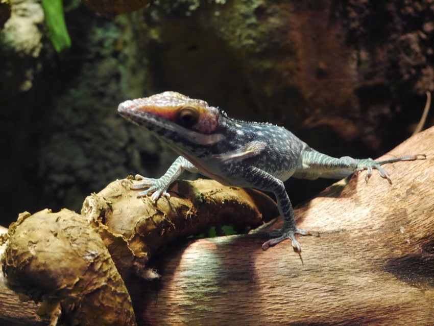 Террариум с рептилиями