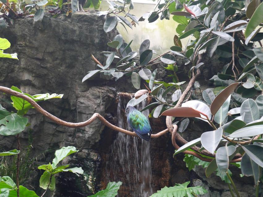 Птицы в тропической зоне