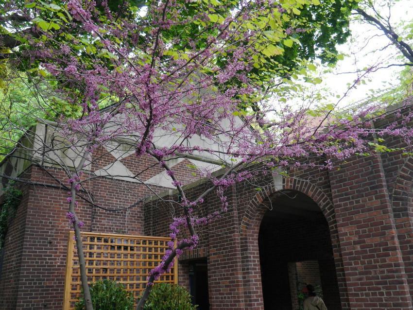 Необычные цветущие деревья