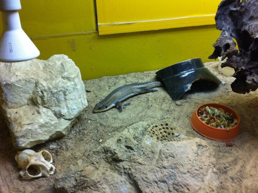 Вольер с рептилиями
