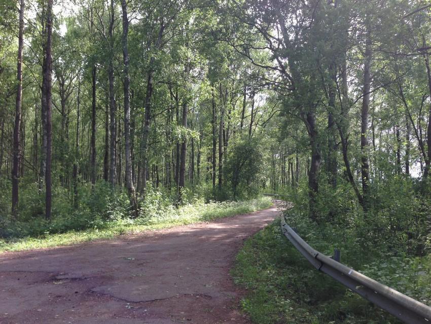 Дорога к шалашу