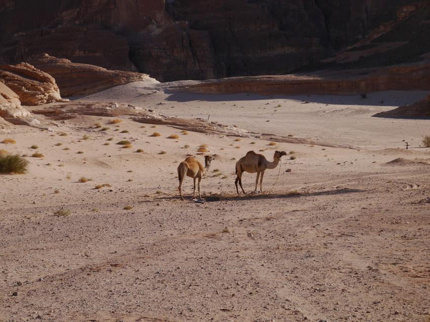 Жители пустынь