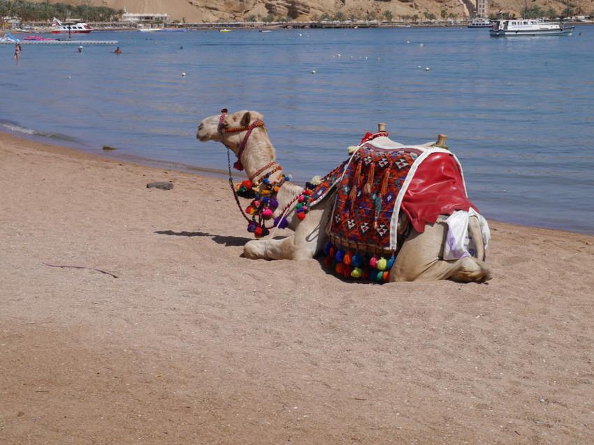 Транспорт некоторых бедуинов