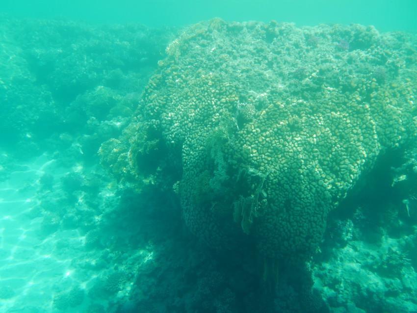 Подводный мир с борта батискафа