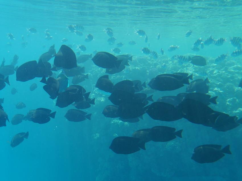 Рыбы в открытом море. С борта батискафа.