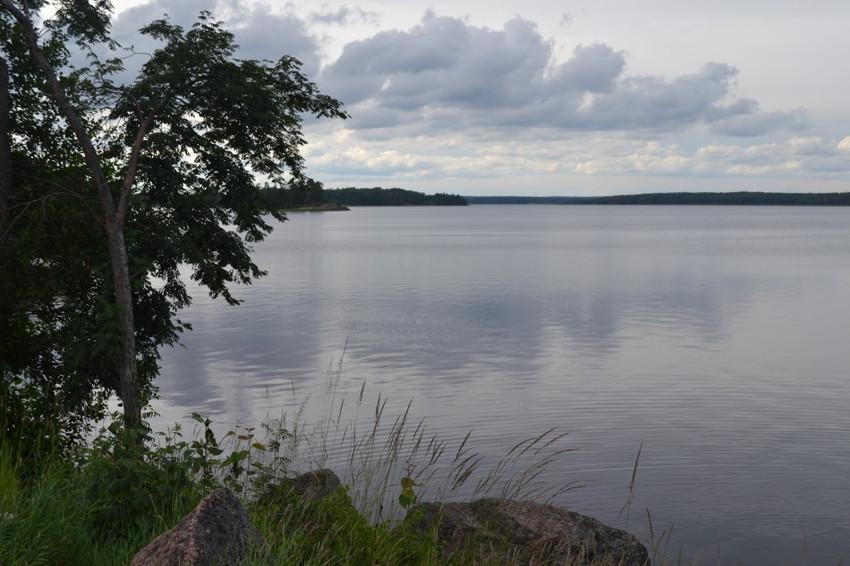 Финский залив с берега Монрепо