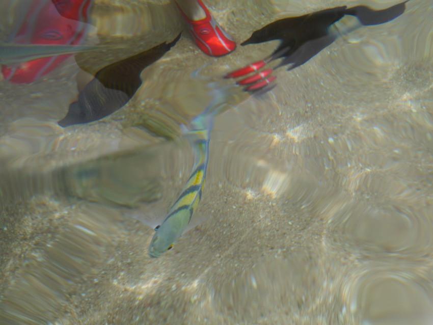 Рыбы у побережья Шарма
