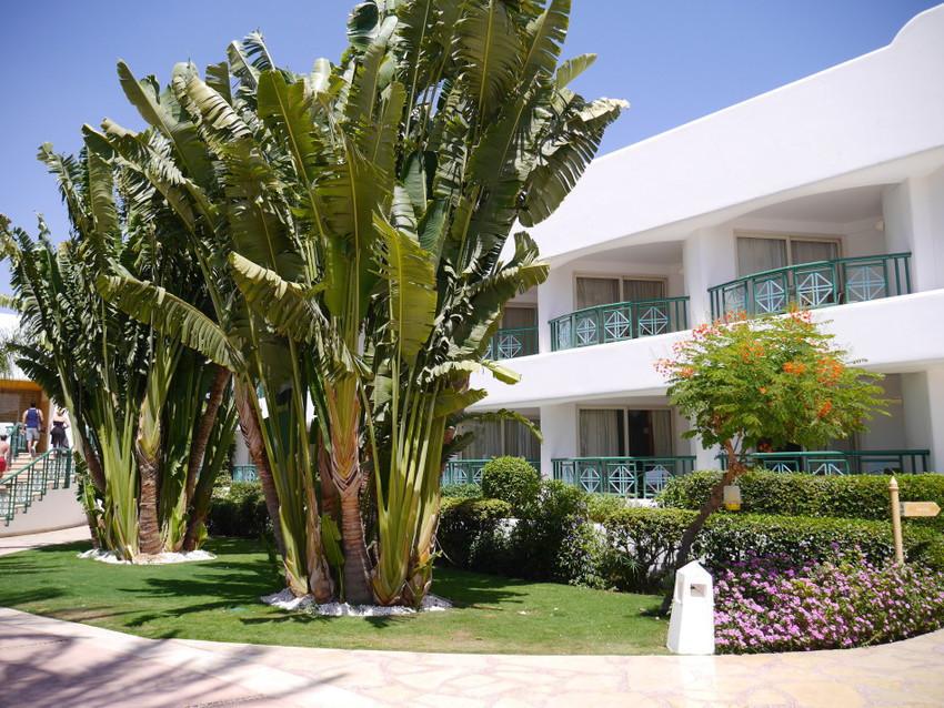 Искусственная растительность отелей