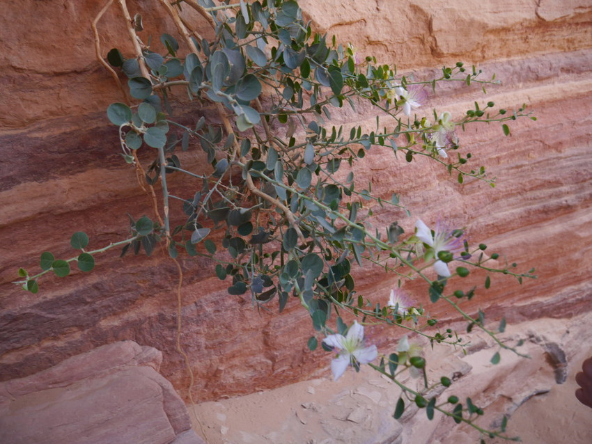 Цветы в пустыне