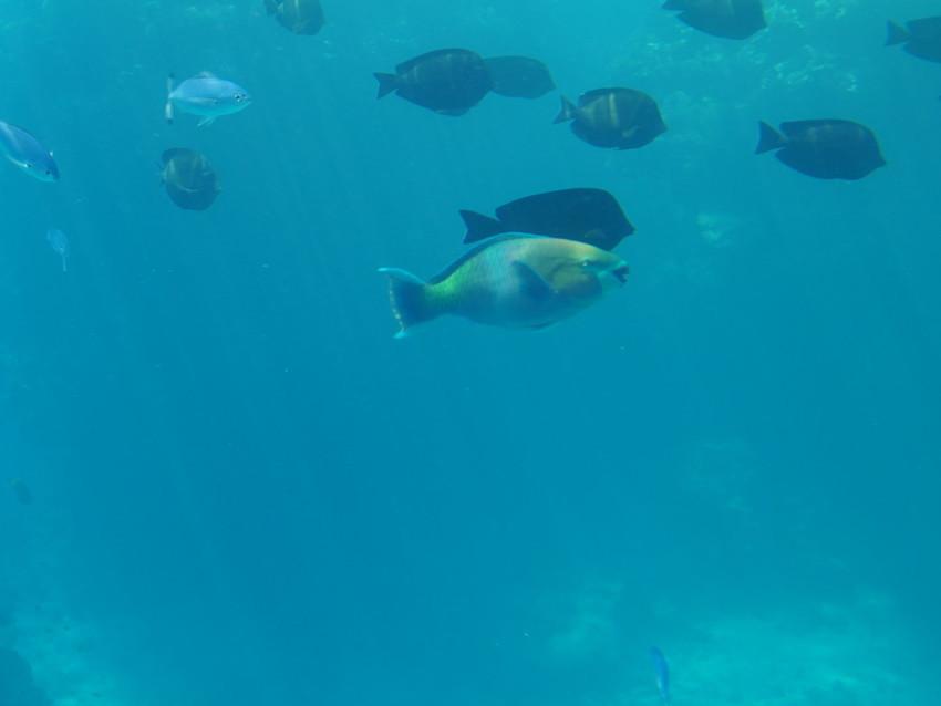 Рыба-клоун. Подводный мир