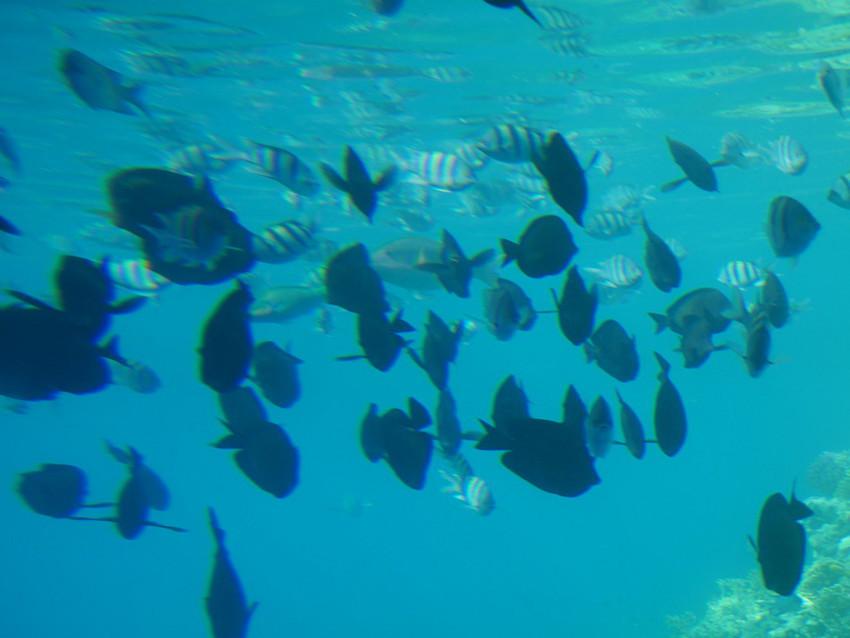 Рыбы. Подводный мир