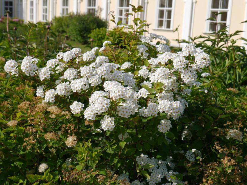Цветы на территории Большого дворца