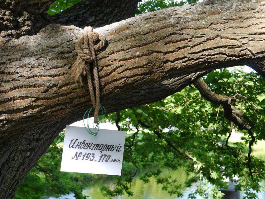 Каждое дерево здесь пересчитано