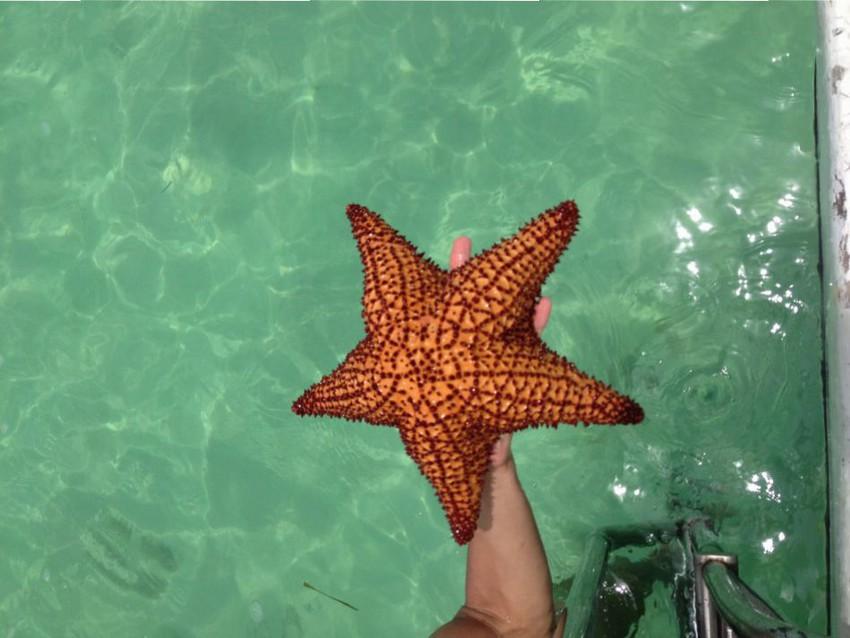 Морские звезды у берегов Доминиканы