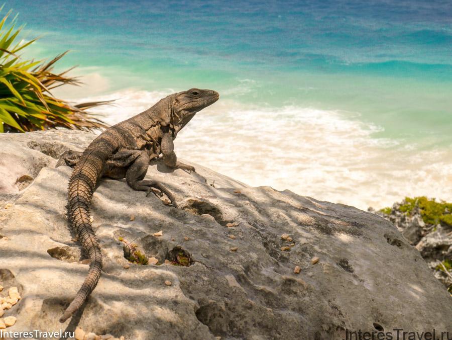 Море и игуана
