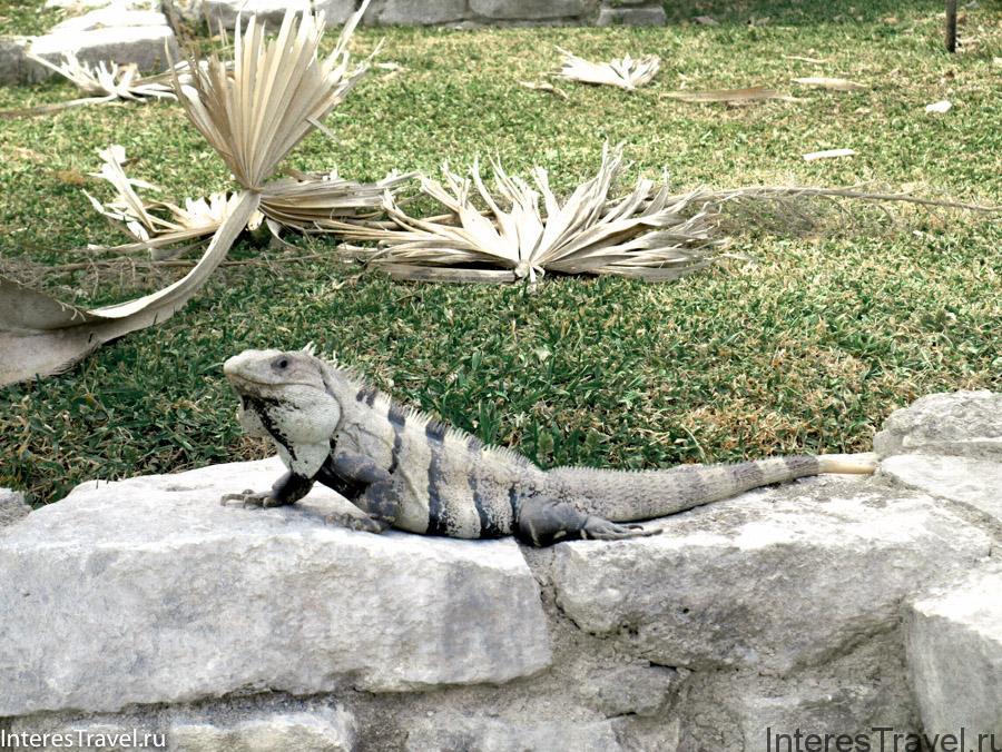 Игуана греется на солнышке