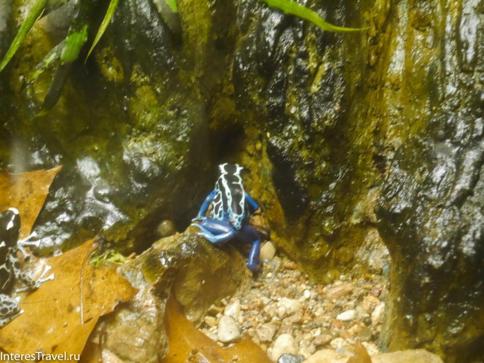Лягушки в Рижском зоопарке