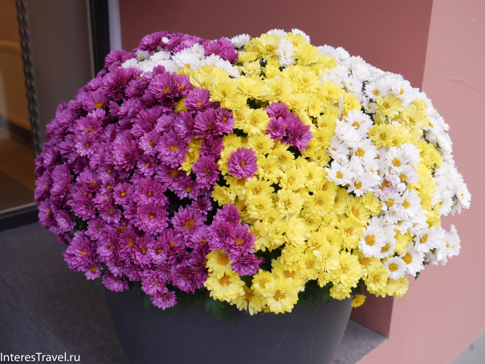 Цветы Риги