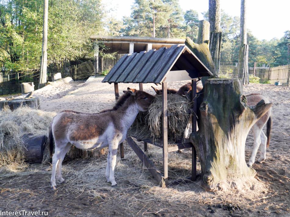 Ослики в Рижском зоопарке