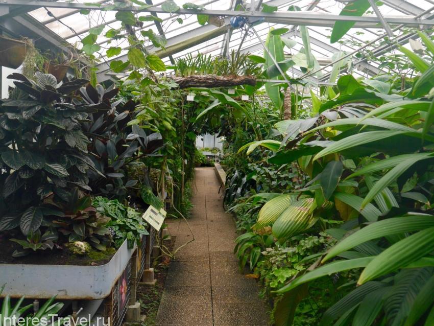 Ботанический сад в Лионе
