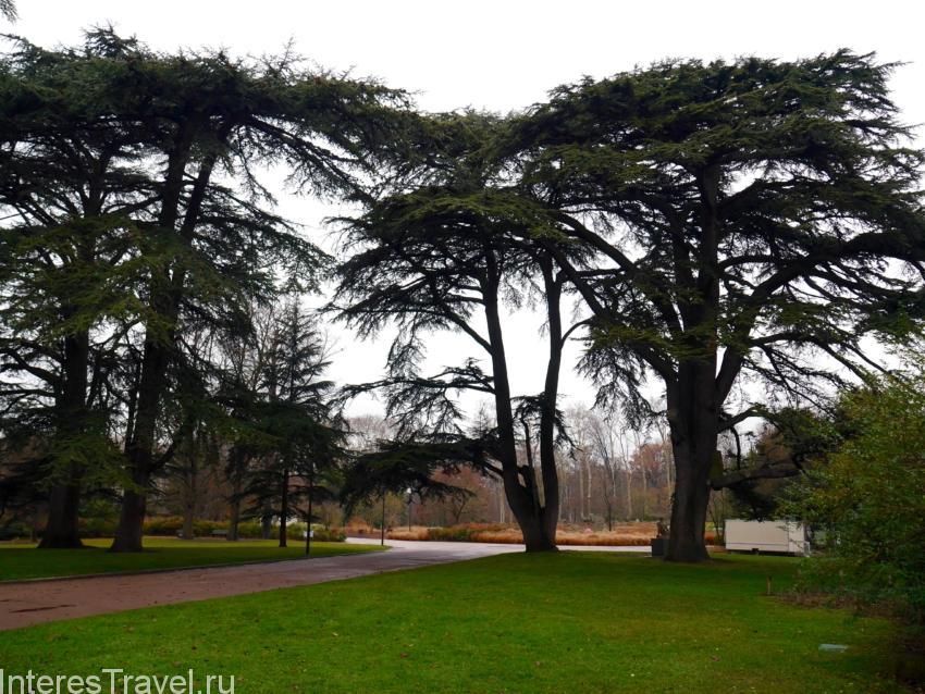 Парк Золотой головы. Аллеи в парке