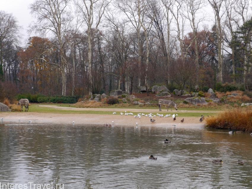 Лионский зоопарк в парке