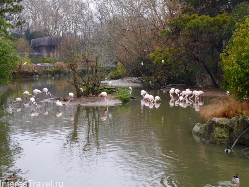 Зоологический парк в Лионе