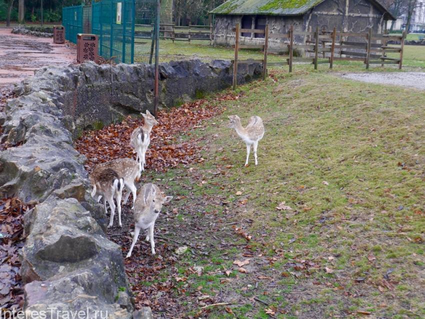 Зоологический парк в Лионе. Олени